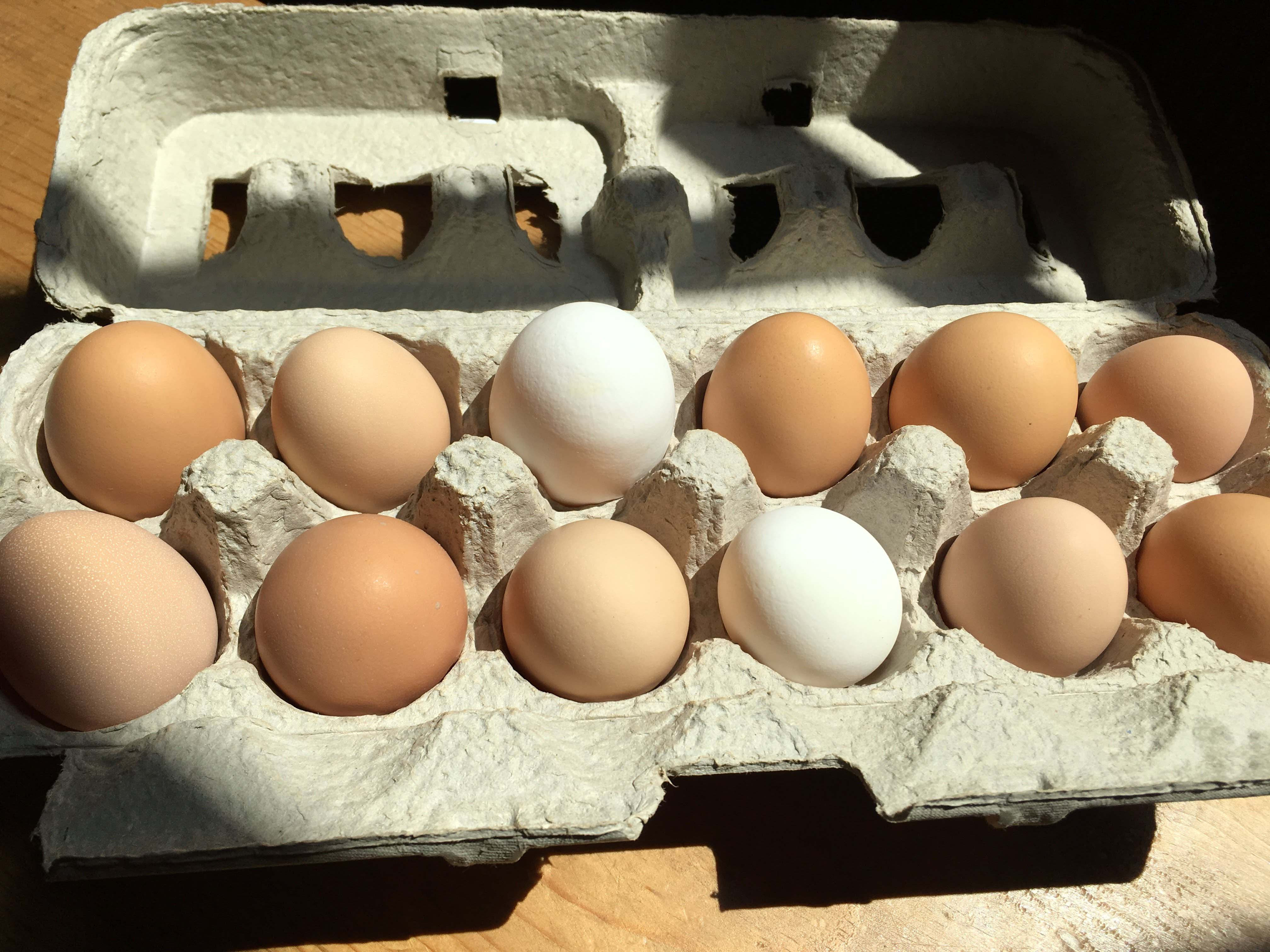Eggs for Shelters