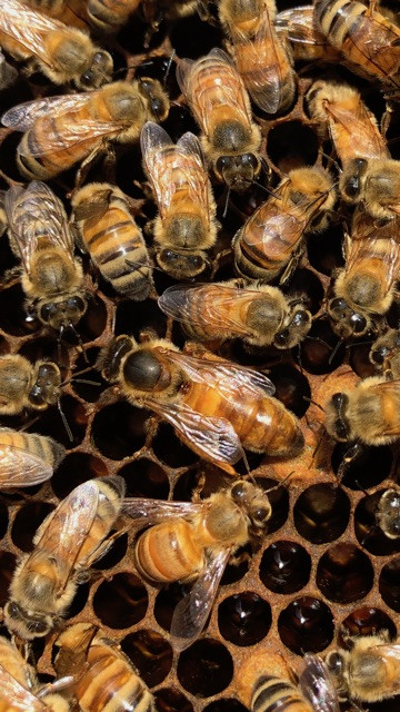 Local honey supports your community. But can it also boost your health?