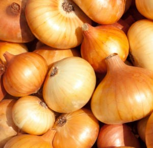 Yellow Sweet Onions - Rowland Row Farms