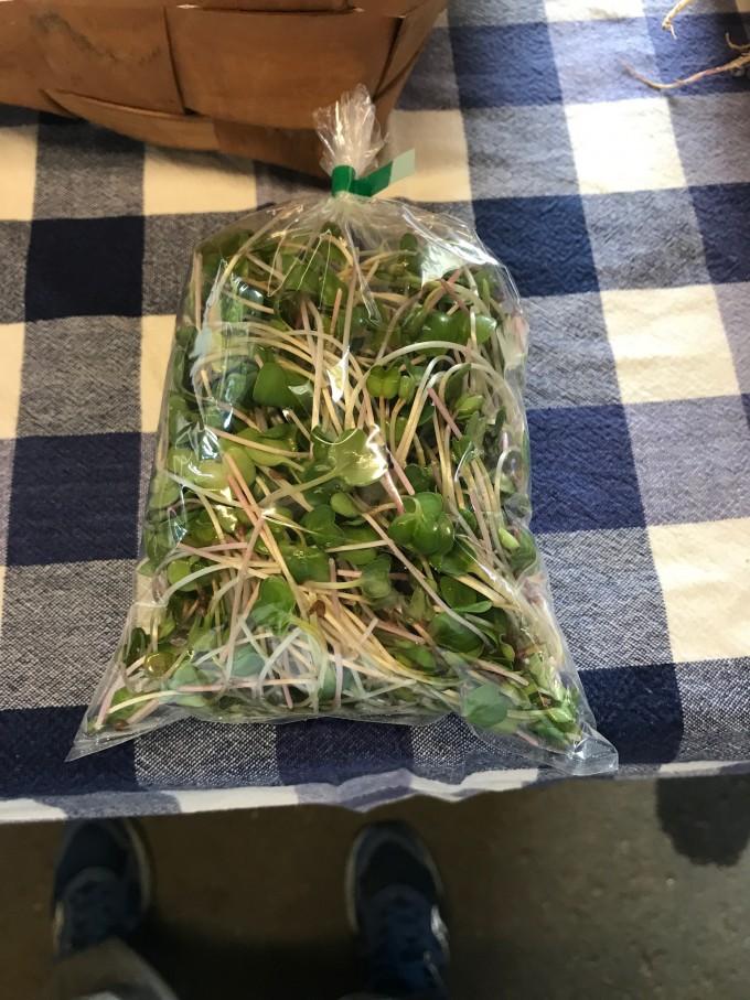 Micro Greens - Radish Shoots