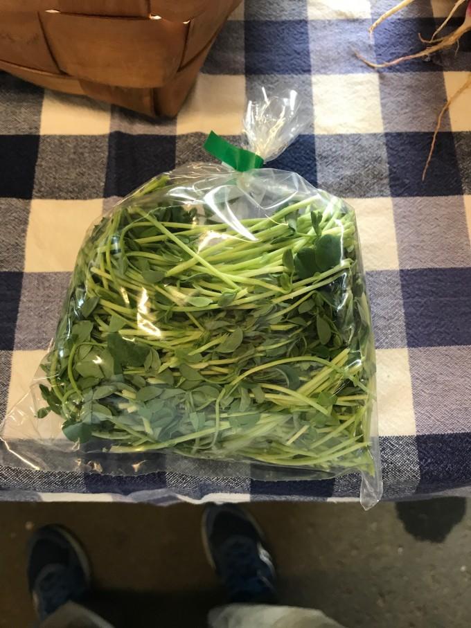 Micro Green Bundle - Save on 3 packs
