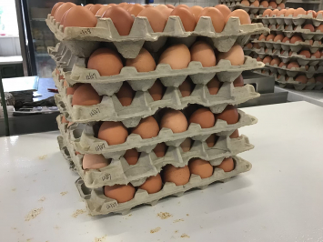 15 dozen case of eggs