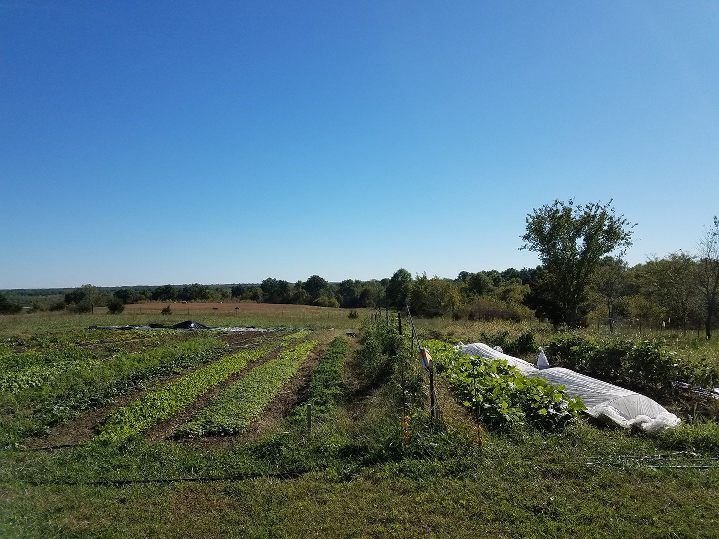 St Clair Farmstead's main market garden plot
