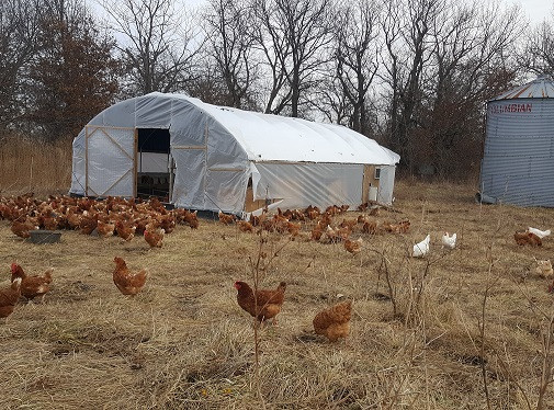 Pasture Raised Laying Hens (Winter Edition)