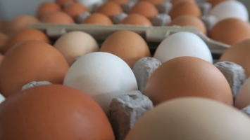 Chicken Eggs - Dozen-and-a-half