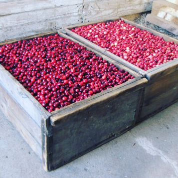 Heirloom Cranberries- 2 lbs