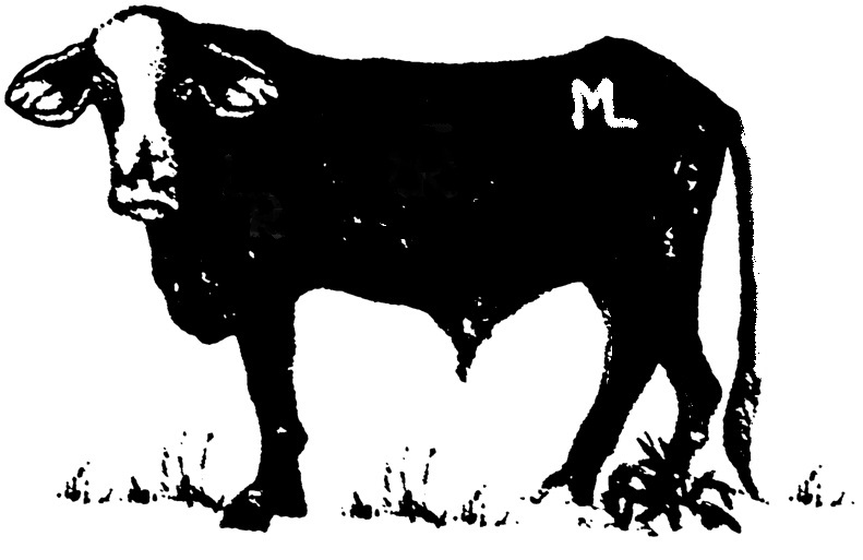 Cow - 1/2 Side of Beef