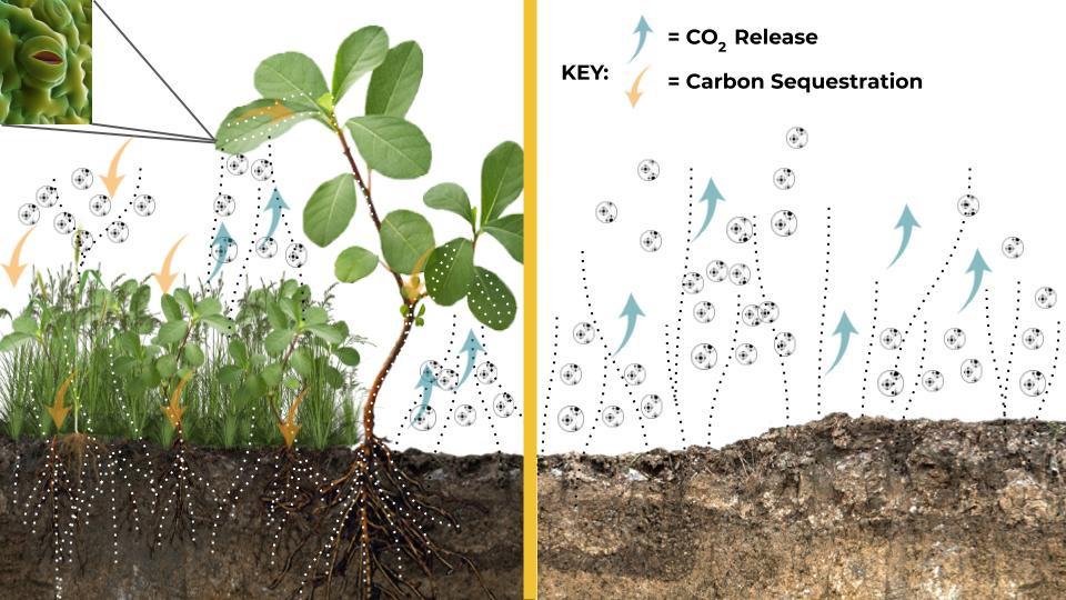 What is Regenerative Ag anyways? Soil Health Principle 4