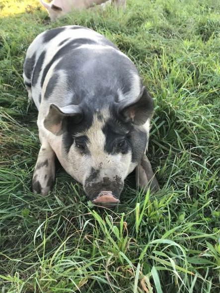 September Farm Update