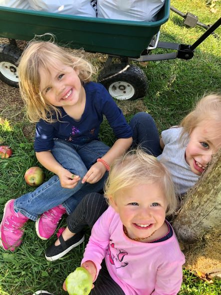 Pigs and Apples & Bale Grazing Cattle