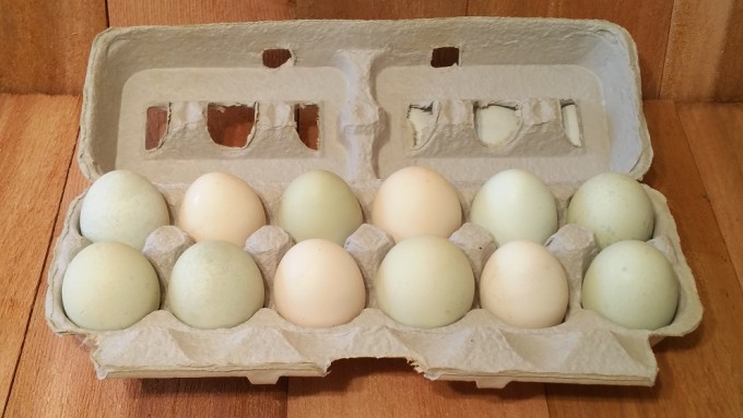 10 Doz. Bundle Aurocana Eggs