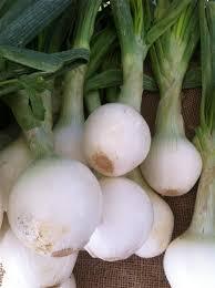 Fresh Onions - UNLIMITED