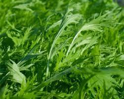Fresh Greens (Mustard)