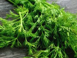 Fresh Herbs (Dill Leaves)