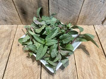 Fresh Herbs (Peppermint)