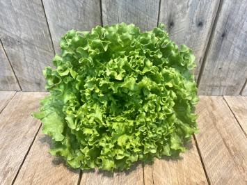 Fresh Lettuce Head (Muir)