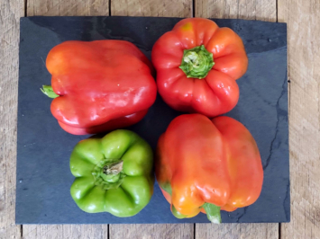Bell Peppers (Assorted Color)