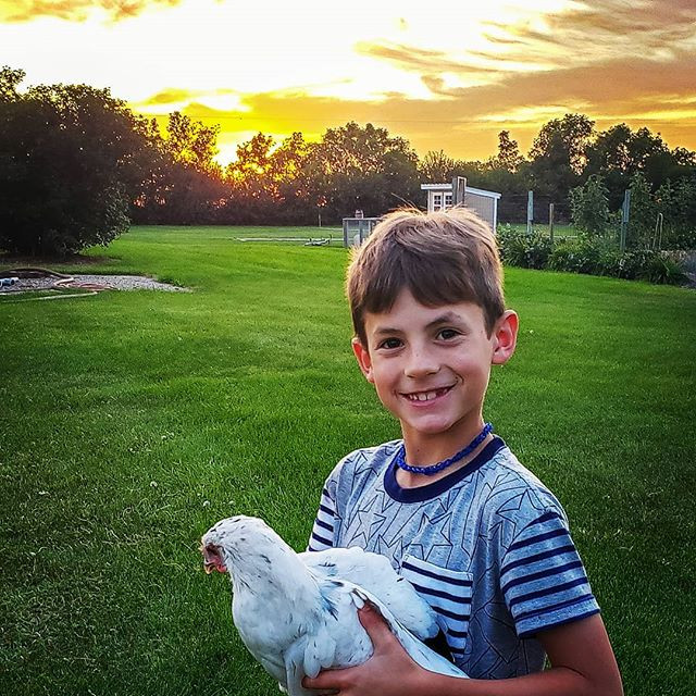Lucas moving Chickens