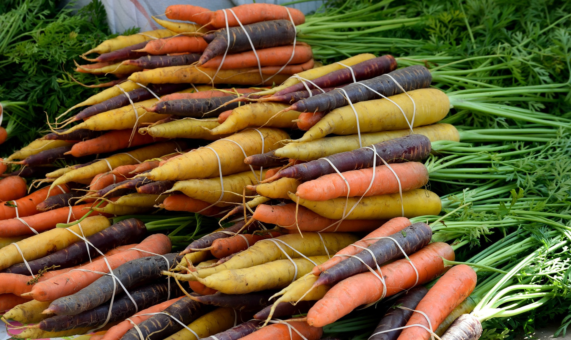 Organic Carrots - multi-colored