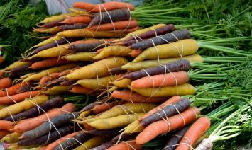 Organic Carrots - multi-colored