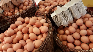 Case of Eggs