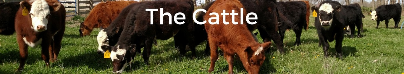 The-Cattle.jpg