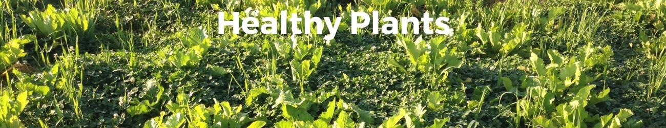 Healthy-Plants.jpg