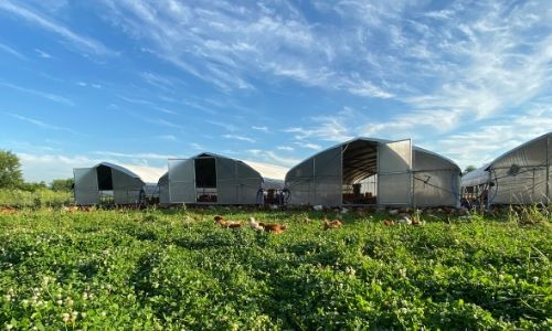 Beyond Organic Pasture Raised Chickens