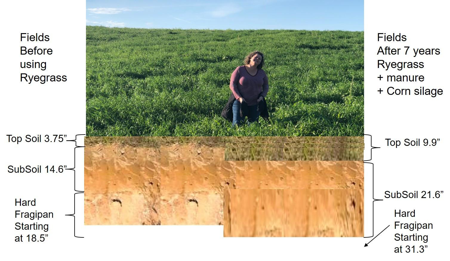 Impact of Regenerative Agriculture