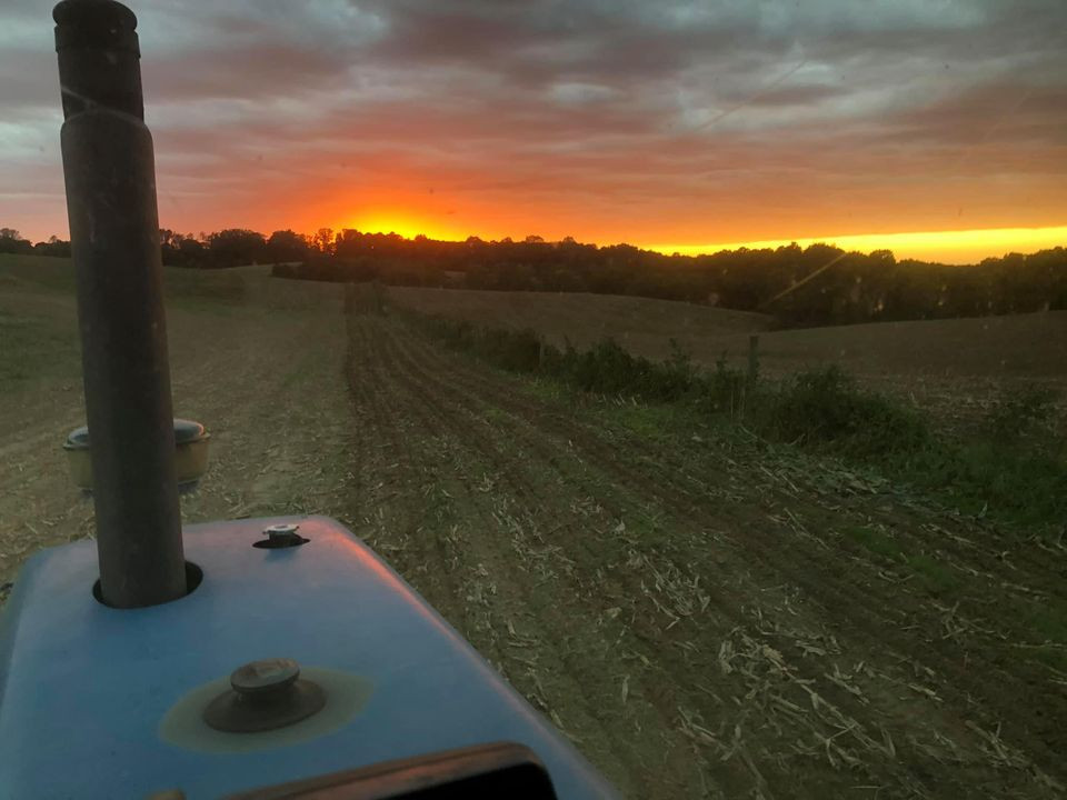 Planting Ryegrass by Sunset Light