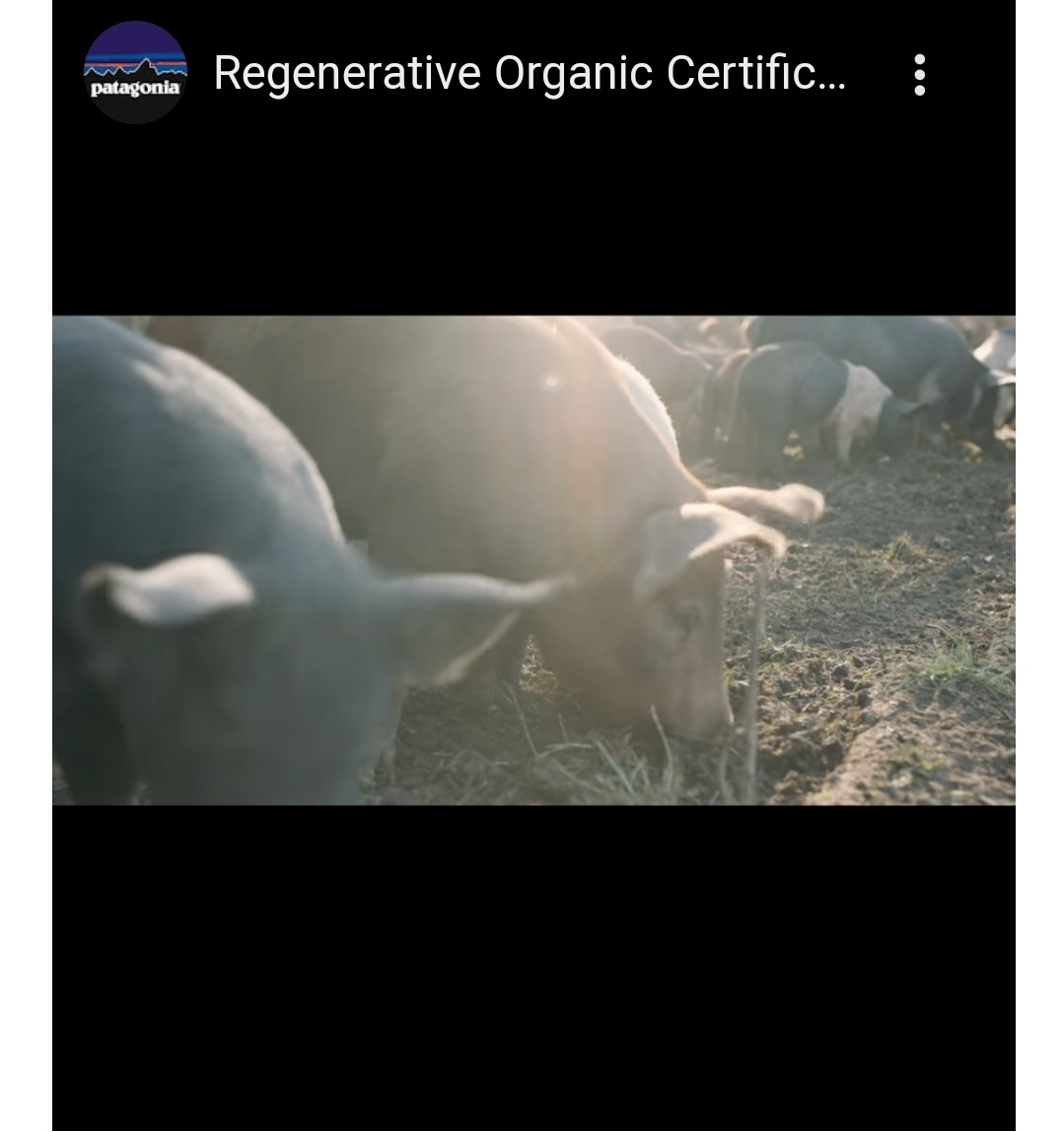 Article Worth Reading #2 - Regenerative Organic Alliance - Farming like our world depends on it
