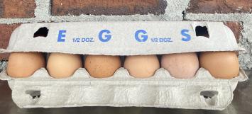 Darby Farms Eggs