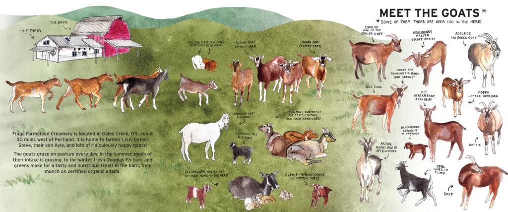 Fraga-illust-02-goats-1024x427.jpg
