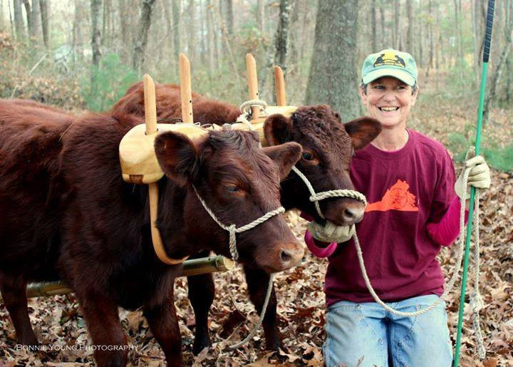 Interview with a Serial Cow Dealer