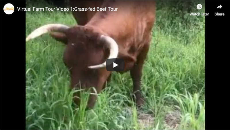 Virtual Farm Tour - Grass-Fed Beef