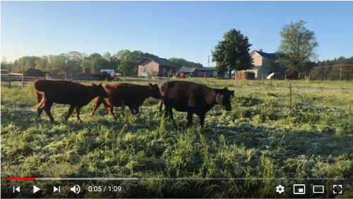 Why We Move Our Cows Daily