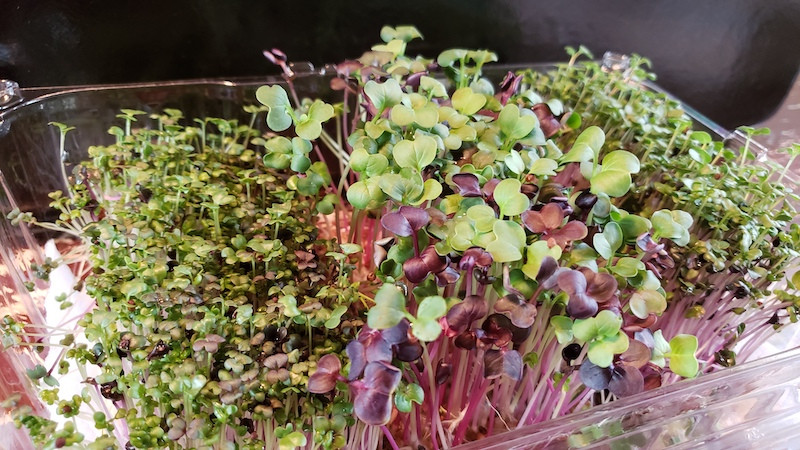 Sowing Seeds - Super Salad Combo