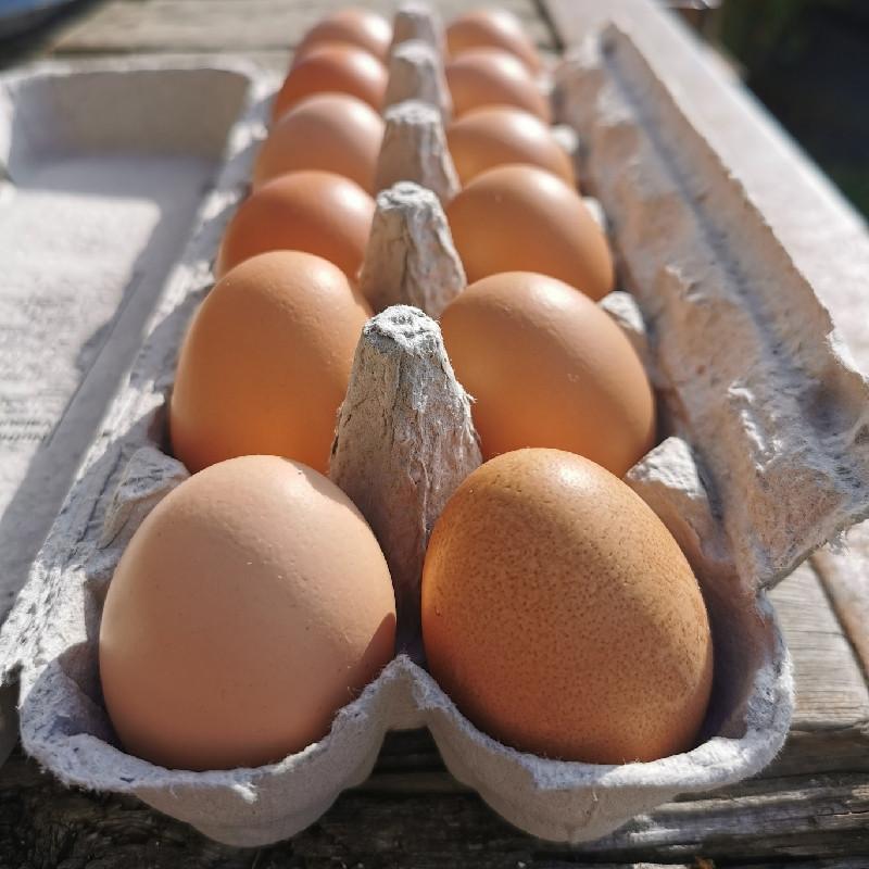 Eggs - LARGE certified organic eggs