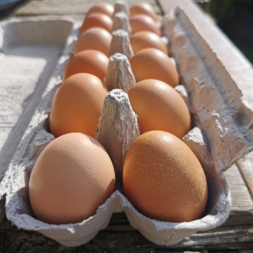 Eggs - LARGE certified organic eggs