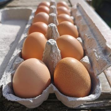 Eggs - hens fed certified organic feed