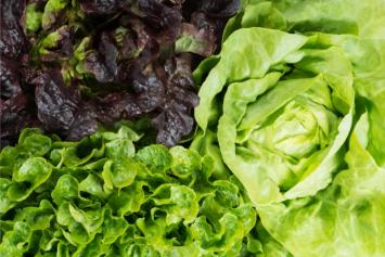 Lettuce Heads - Multipak - 6 heads
