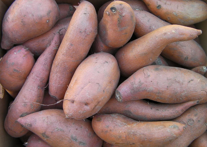 Sweet Potatoes, 40lb Box #1s