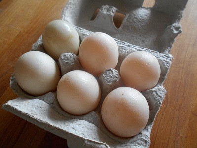Duck Eggs - 1/2 dozen