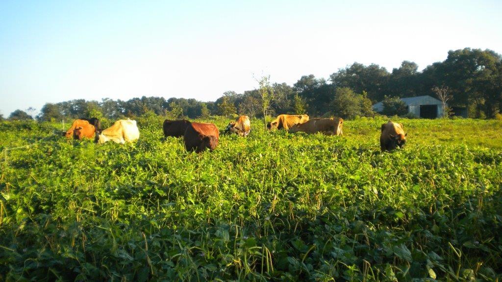 Farm Report 10/22/15