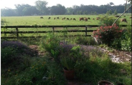 Farm Update- 3/27