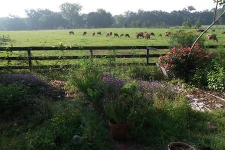 Farm Report - 6/5/15