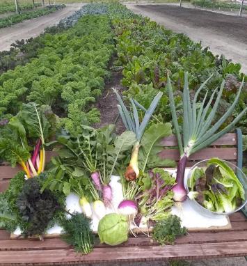 Winter Produce Share