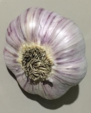 Garlic, Hardneck