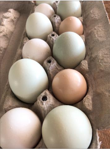 Eggs, Chicken Multicolored