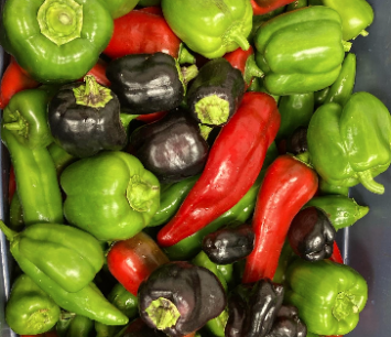 Peppers, mixed sweet/bell